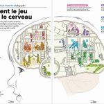 Comment le jeu façonne le cerveau