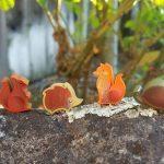 Photosynthesis : une extension pour Septembre